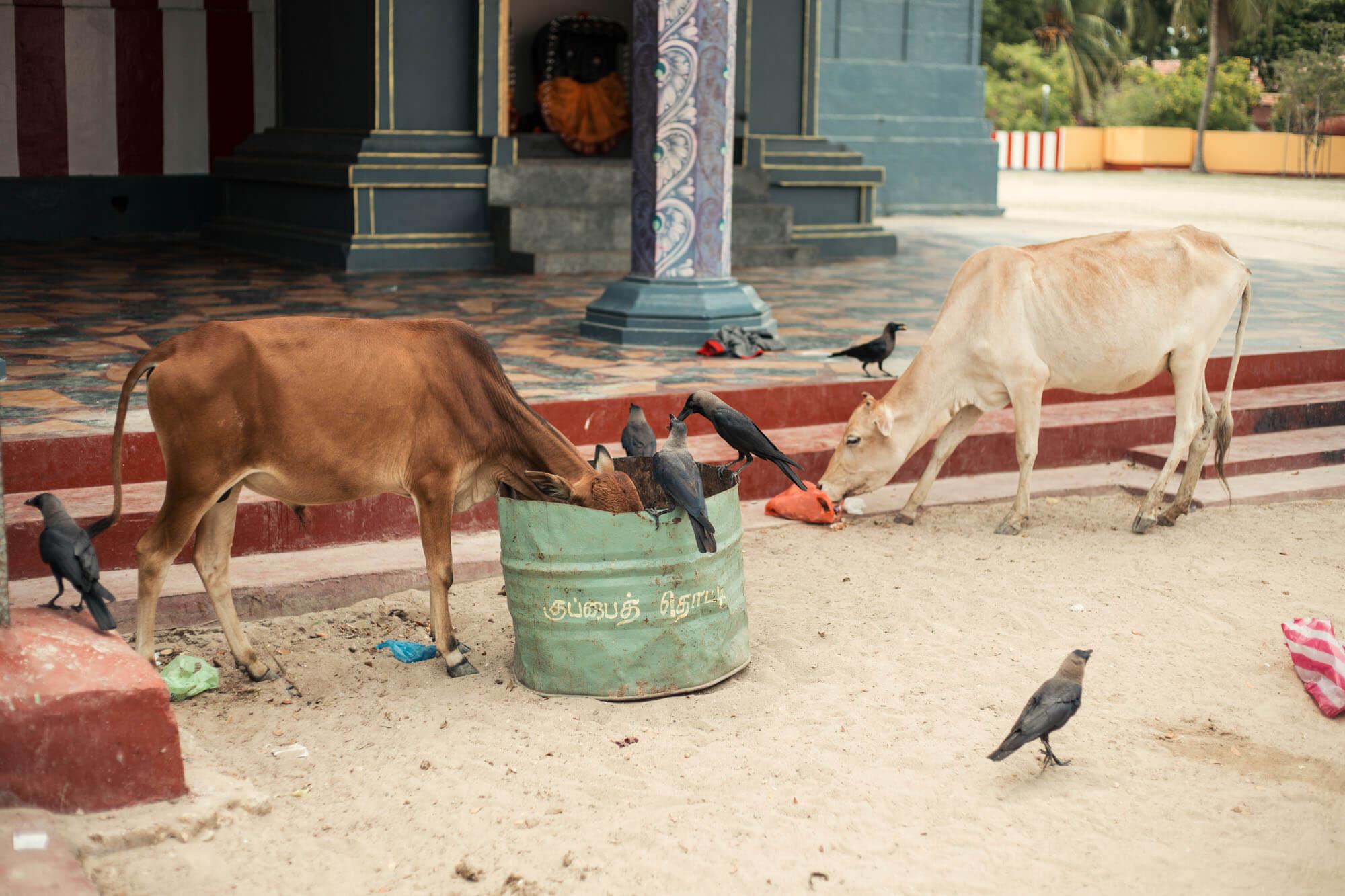 Pierre Desrumeaux photographie de reportage documentaire en Asie